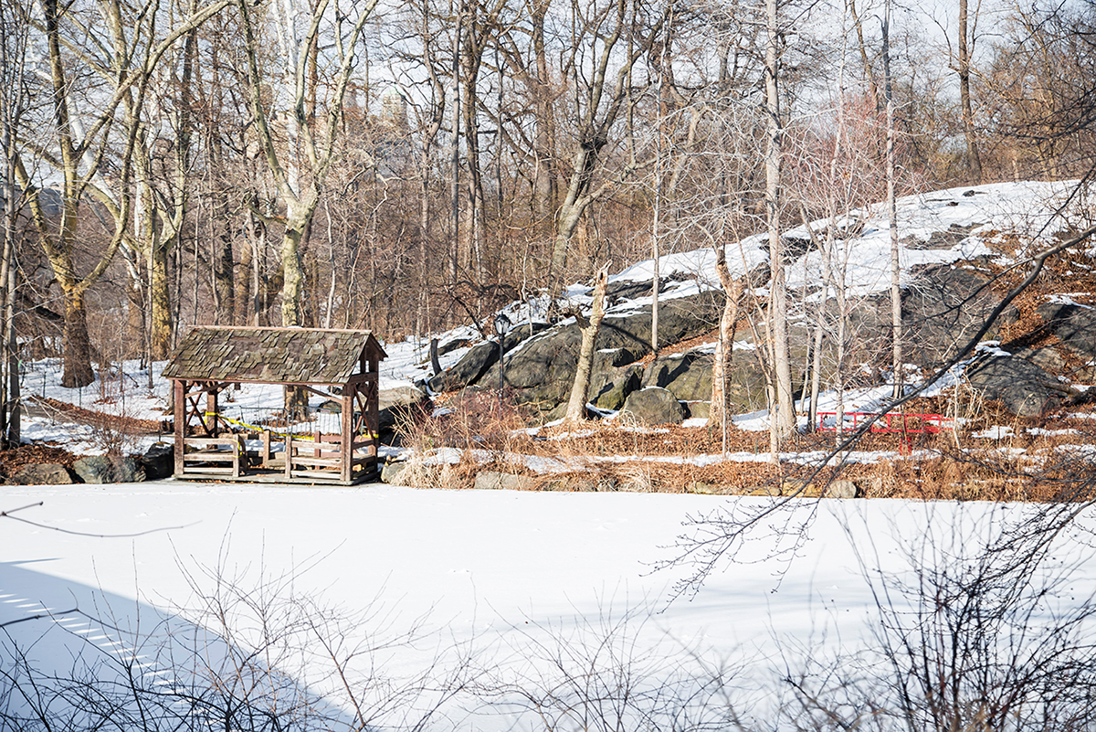 Beautiful photos of New York City February 2015 Central Park under the snow