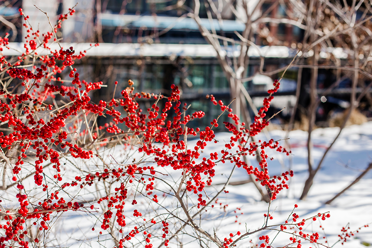 New York City february 2015 photo journal berries