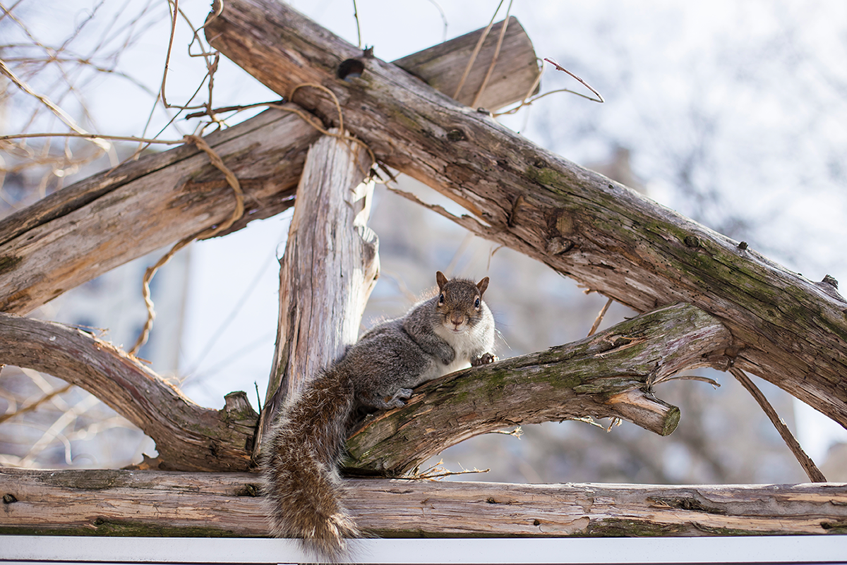 New York City february 2015 photo journal chipmunk