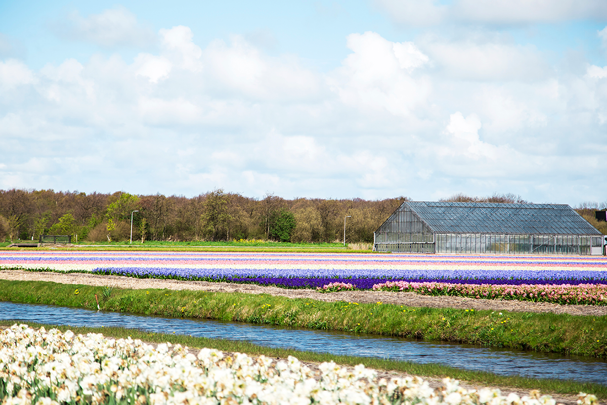 Weekend Travel Guide to Rotterdam and the Tulip Fields