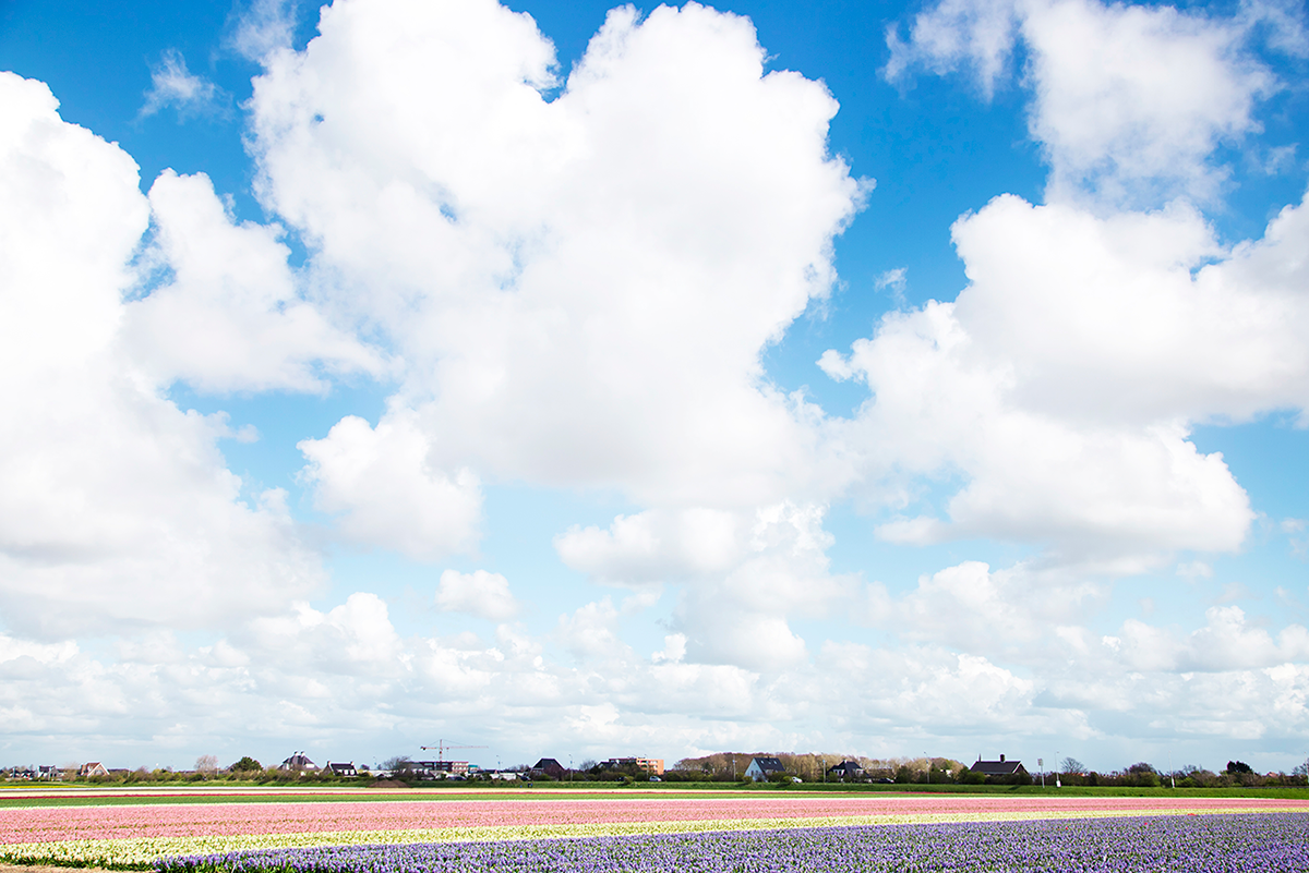 Noordwijk Weekend Travel Guide to Rotterdam and the Tulip Fields